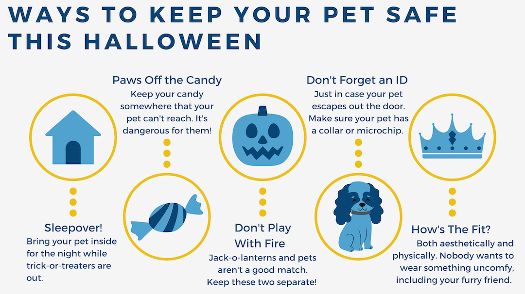 Tips and tricks to keep your pet safe during Halloween