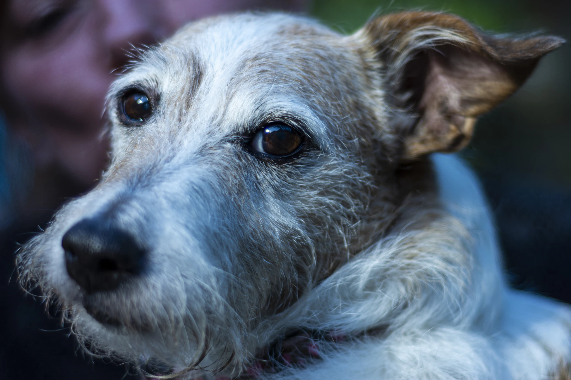 Are you calling me old? I'm just experienced. Senior pets need love too.