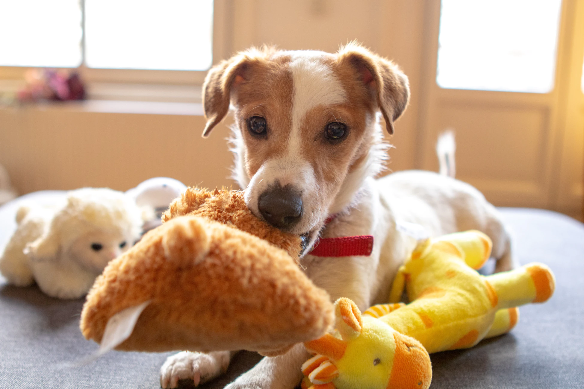 Tips and tricks to keep your dog entertained while you are away