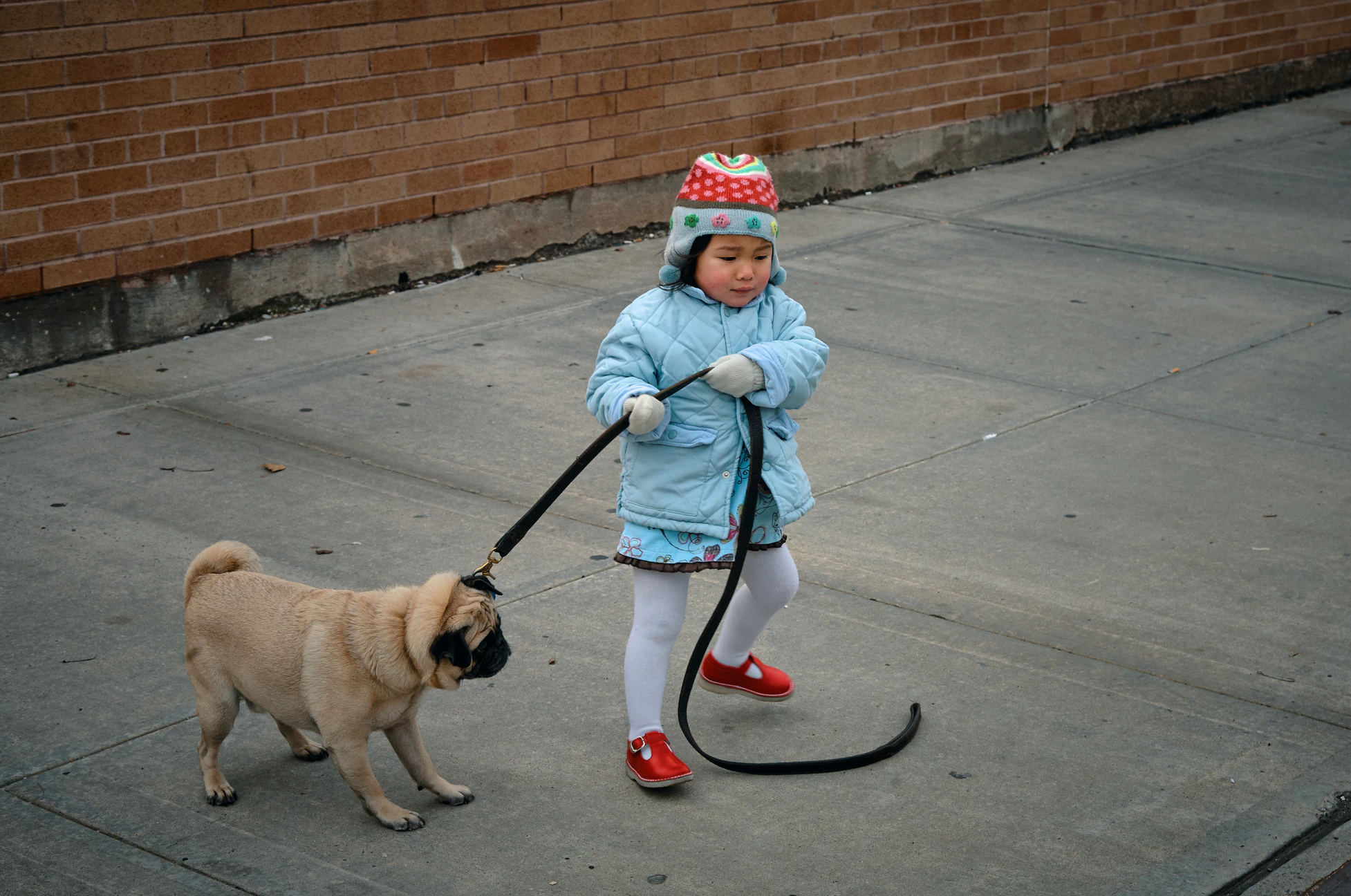 Behavioral changes don't happen overnight. Dogly and Wagmo can help make it happen.