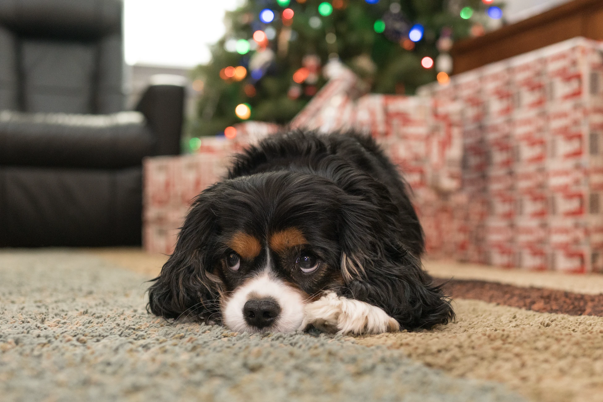Gifts for your fur family so that no one is left out