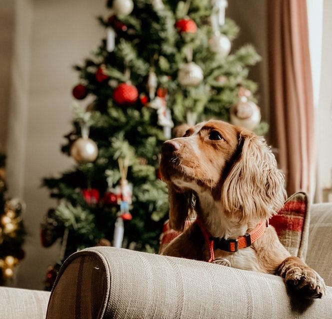 Holiday Treats That Your Pet Will Want to Put on Their Wish List