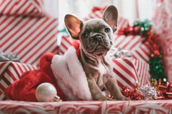 Last-Minute Gifts for Cat and Dog Lovers