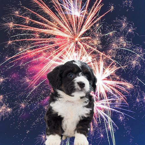 Keeping Your Dog Calm During Fireworks