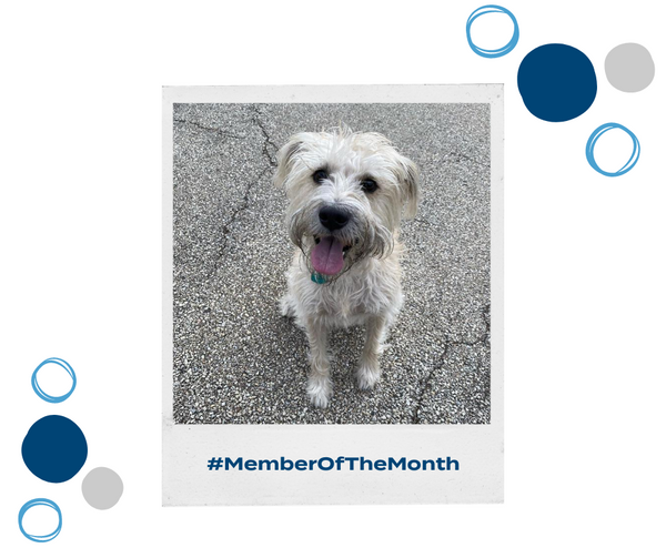 Introducing... Our Wagmo Member of the Month!