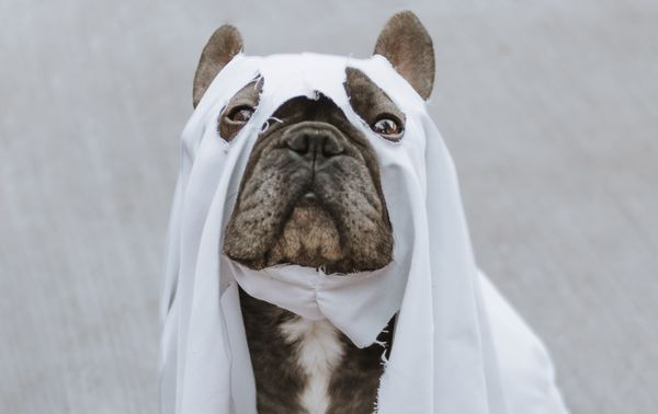 5 Pet Safety Tips You Should Know for Halloween... Featuring COVID-19