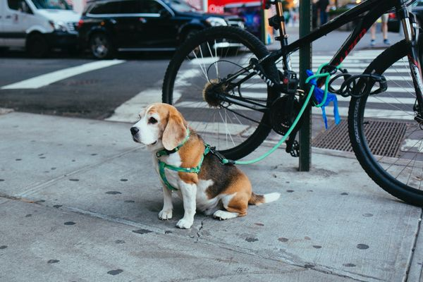 Pet Insurance in New York City